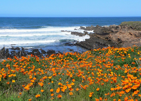 View of the coastline from Montaña de Oro State Park, Los Osos, California. (Photo Credit: docentjoyce / Flickr)