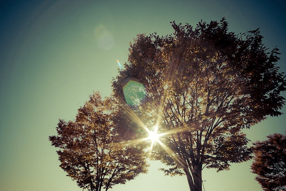 Sun shining through tree. (Photo Credit: Pixabay)