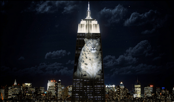 A representation by Ron Robinson of a snow leopard, projected on the Empire State Building. (Photo Credit: Joel Sartore and Ron Robinson / Obscura Digital)