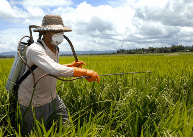 A worker applies pesticide to crops. (Photo Credit: Day Donaldson / Flickr)