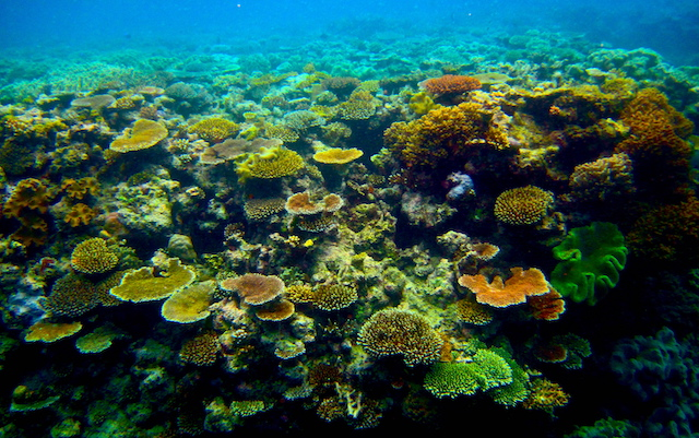 Coral on the Great Barrier Reef. (Photo Credit: Kyle Taylor / Flickr)
