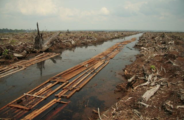 Deforestation of peat swamp forest for palm oil plantation in Indragiri Hulu, Riau Province, Sumatra, 2006. (Photo Credit: Aidenvironment via WikiMedia Commons)