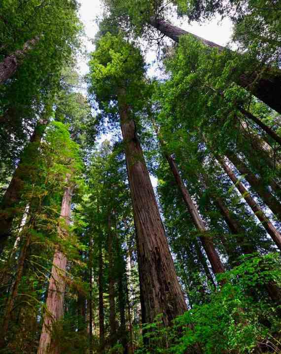 Image via Redwood National and State Parks - 133,000 acres of majestic beauty.