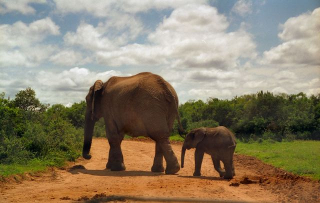 Elephant and child, Addo Elephant Park, South Africa. (Photo Credit: Brian Snelson / Flickr)