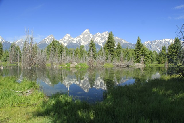Grand Teton National Park, with dying pines in the foreground. (Photo Credit: Alexander Verbeek)