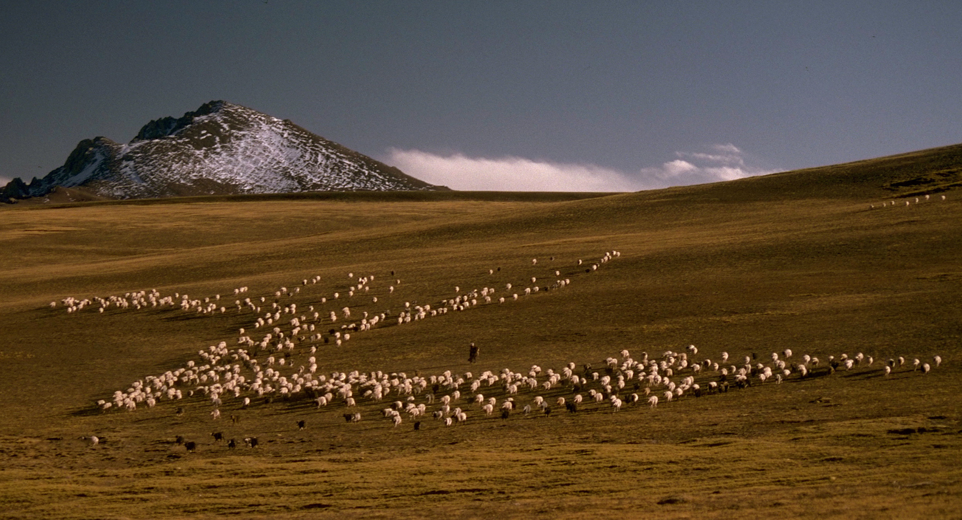 This grassland region is in good shape. Nomadic herders in Tibet often have mixed flocks--of sheep, cashmere goats and yaks.