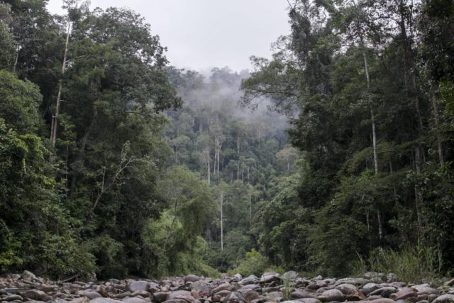 The lush jungle of the Leuser Ecosystem in Indonesia. (Photo: Nanang Sujana / Planet Experts)