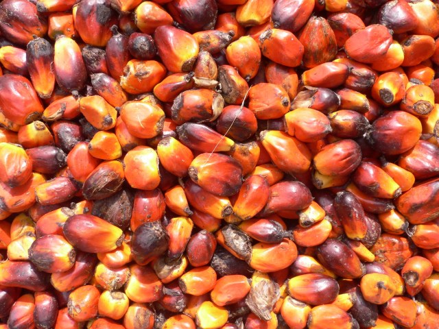 Palm nuts. (Photo Credit: oneVillage Initiative / Flickr)