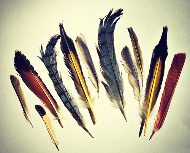 Feathers from migratory North American birds, Genoscape Collection. (Photo: Belinda Weymouth)