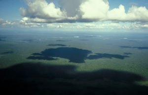 Lowland Forests of Borneo