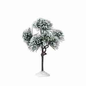 mountain pine-pino-74175-lemax