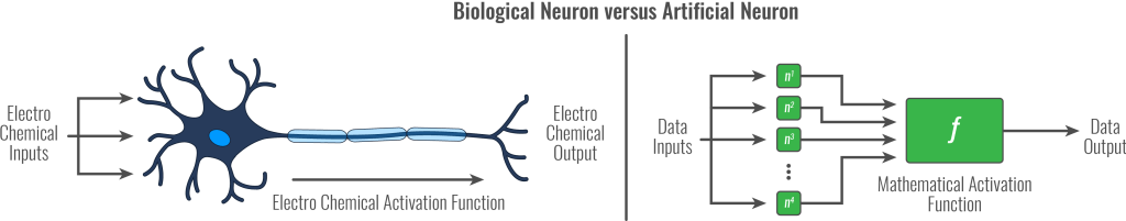 Biological Neuron versus Artificial Neuron