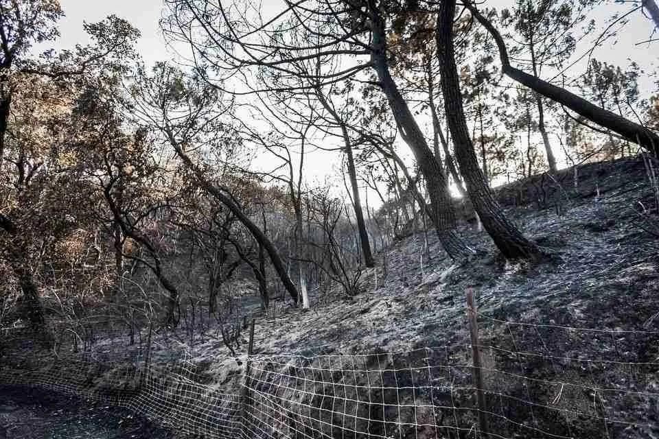 The Sierra Bermeja has been devasted by the blaze
