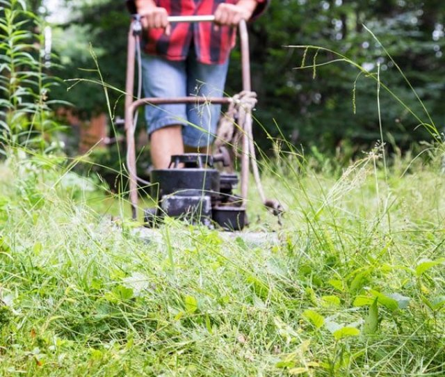 Lawn Rehab Planning