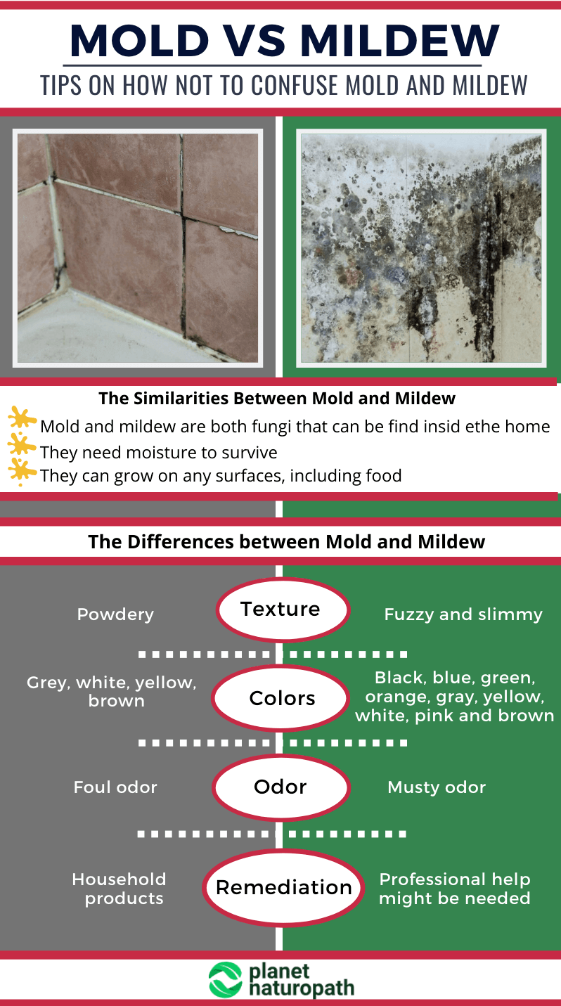 Mold Toxicity 9 Steps To Protect Yourself From Mold Exposure