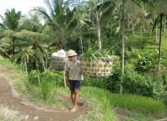 Un contadino nelle risaie di Ubud