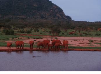 Elefanti al tramonto, Tsavo Est