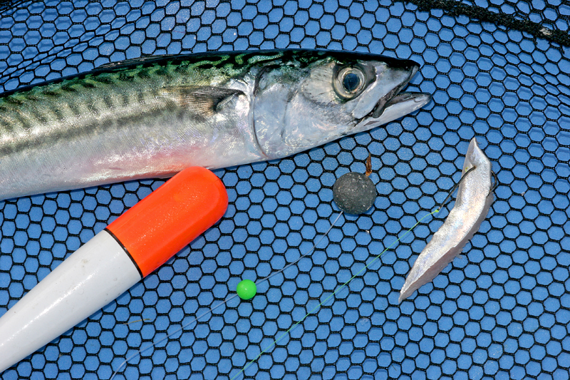 mackerel belly strip on float tackle