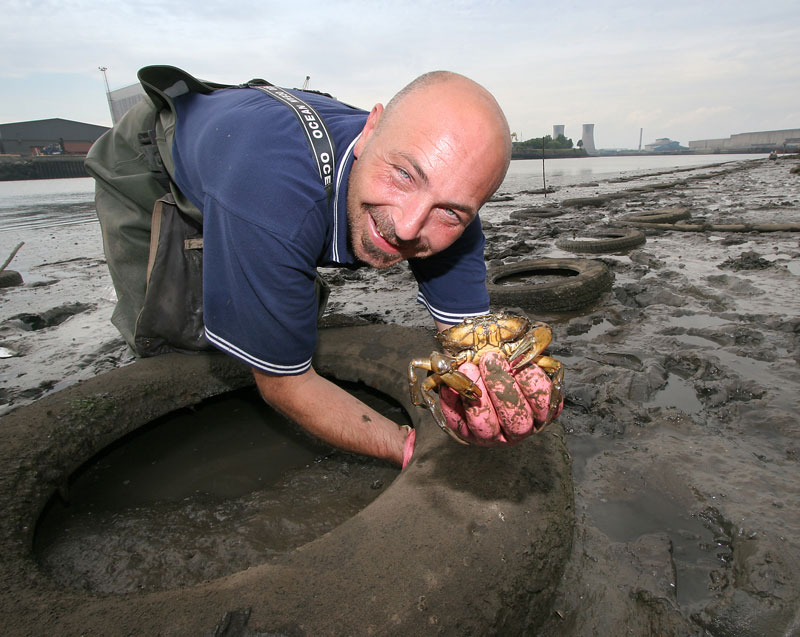 a peeler crab from a tyre