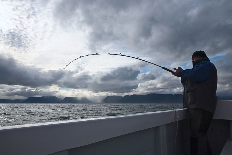an angler with rod bent into a fish in Iceland