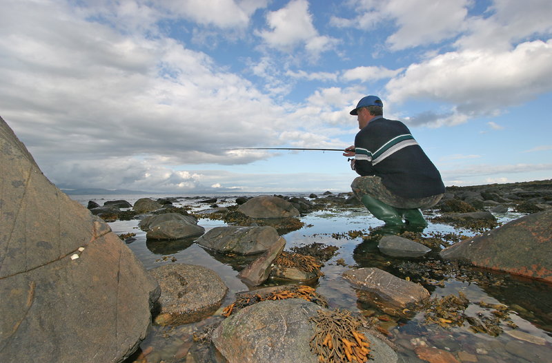 stalking grey mullet on a rocky shore