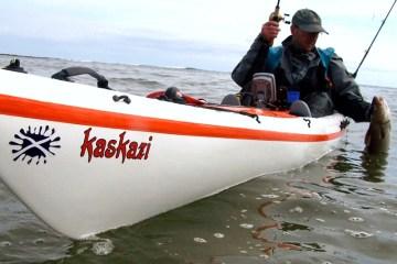 a kayak angler lifting a cod aboard