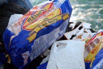 loaves of bread for bait for Alderney black bream