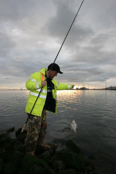 Steve Walker lifts a Greatham Creek flounder