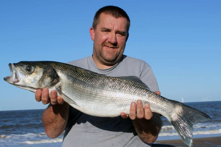Breeding size Skegness shore caught bass