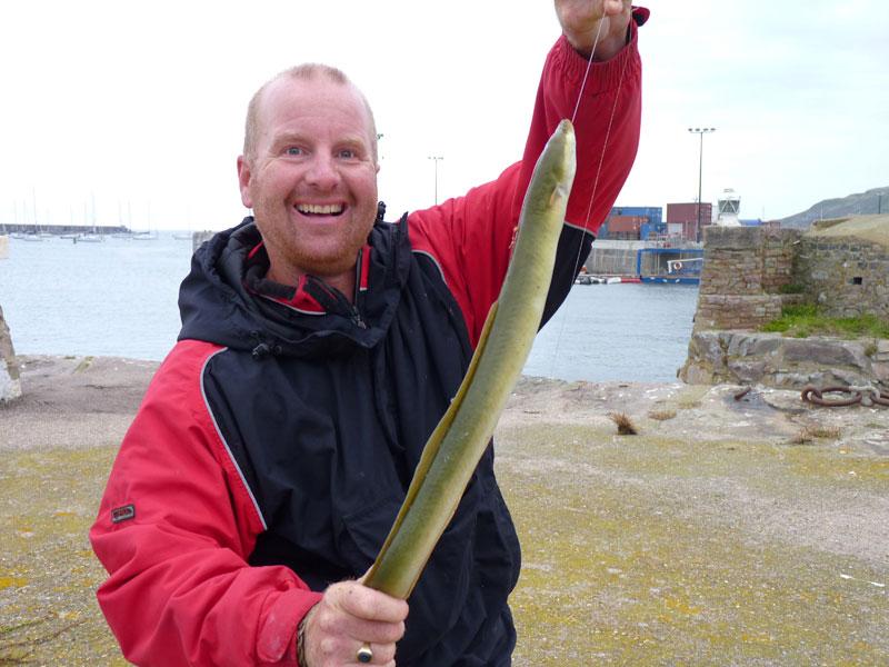 alderney species hunt eel