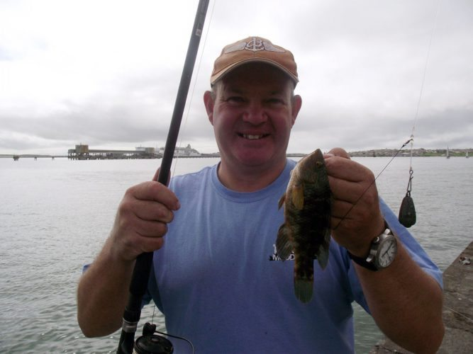 Holyhead Breakwater species session wrasse
