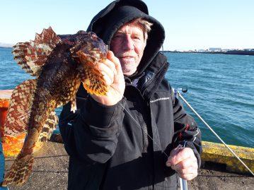shore fishing Iceland skulpin scorpion fish