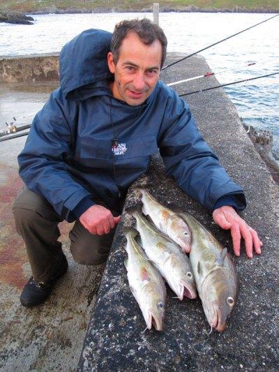 four cod lie on a wall in Beara