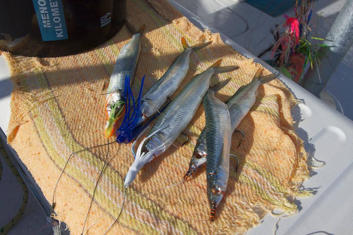 A selection of rigged Ballyhoo for Mexican marlin