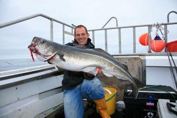 shetland boat fishing coalfish