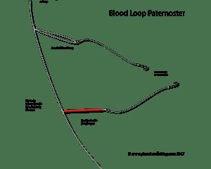 blood loop paternoster rig