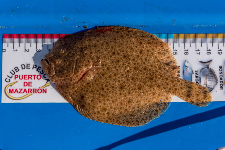 small Embo beach turbot