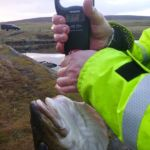 the cod on the scales