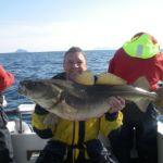 a plump cod from the Lofoten Islands