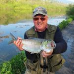 An Irish Angler's Year shad
