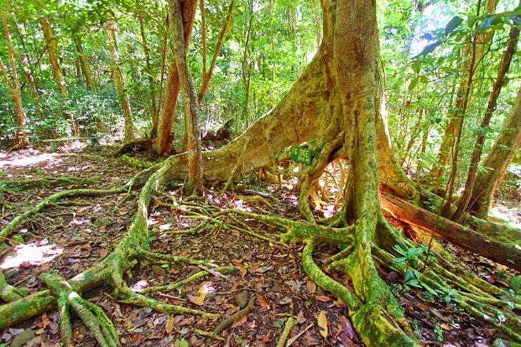 Sage Mountain National Park, Tortola