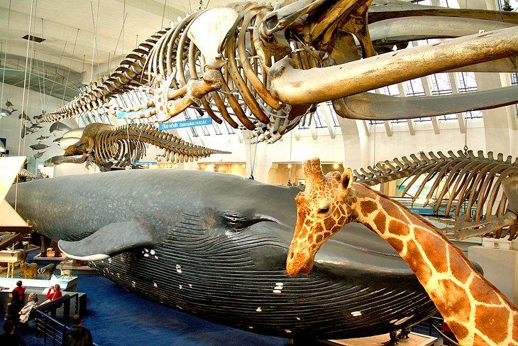london natural history museum mammals - London's Natural History Museum