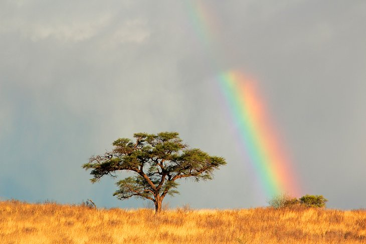 Kgalagadi (Kalahari) Transfrontier Park, Northern Cape