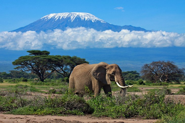 The slopes of the rain-forest are home to buffaloes, leopards, monkeys, elephants and eland