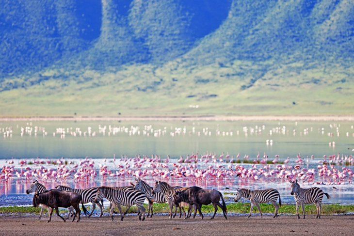 Ngorongoro volcano was one of the world's tallest mountains before it exploded and collapsed