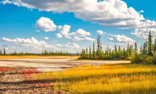Wood Buffalo National Park: 6 Top Things to Do   PlanetWare