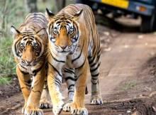 Reserva de tigres Thekkady