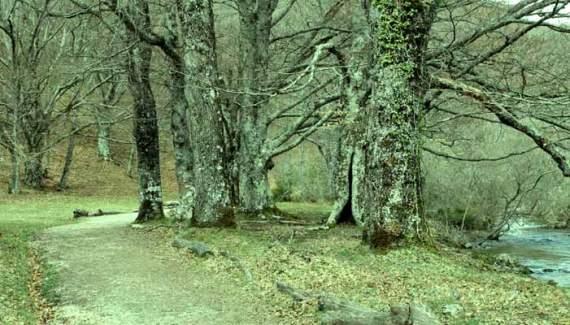 Hayedo de Montejo de la Sierra