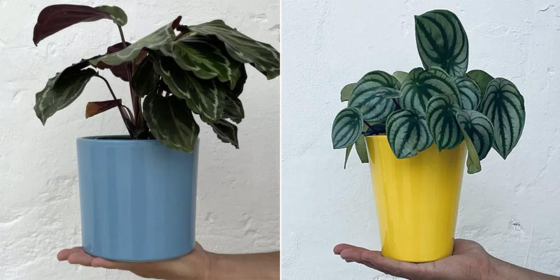 Macetas para plantas desarrolladas