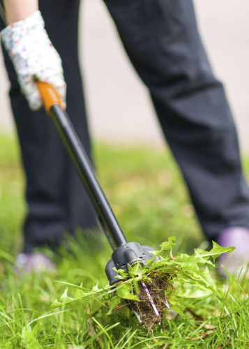 getting your lawn ready for spring